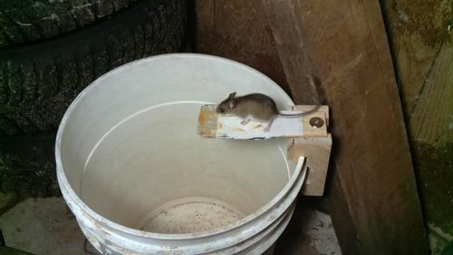 Building A Better Mouse Trap With Video Surveillance