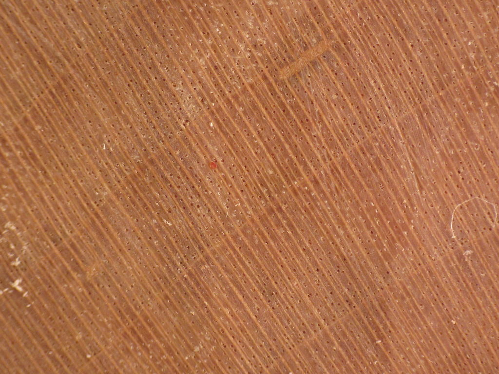 Wood End Grain Photos Other Hardwoods